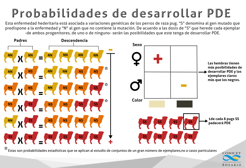 infografia pug compacto